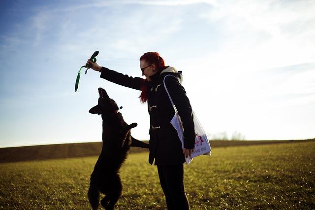 Láska ke psům končí bolestí